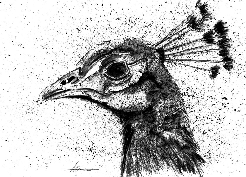 p for peacock.jpg